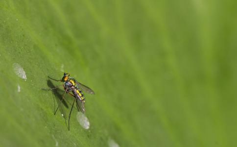 哪些人容易被蚊子咬 夏季如何防蚊驱蚊