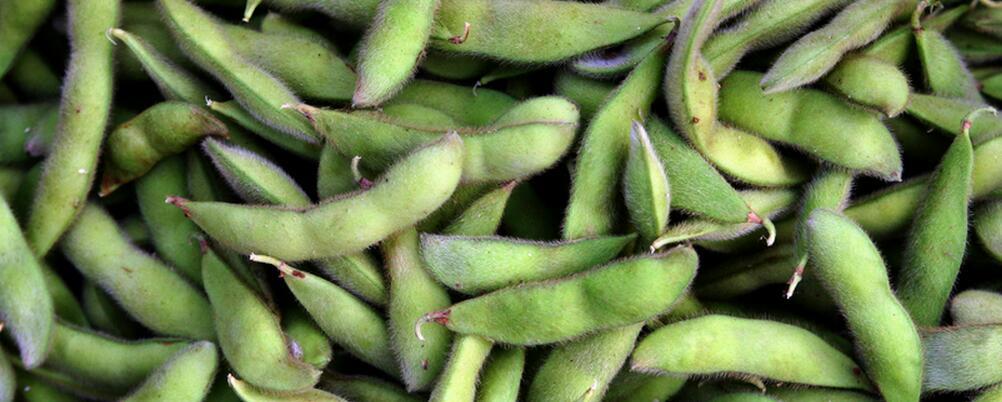 三伏天如何养生 三伏天养生吃什么好 吃哪些豆可以养生