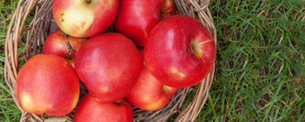 发烧的小孩吃什么 小孩发烧吃什么水果 怎样预防小孩发烧