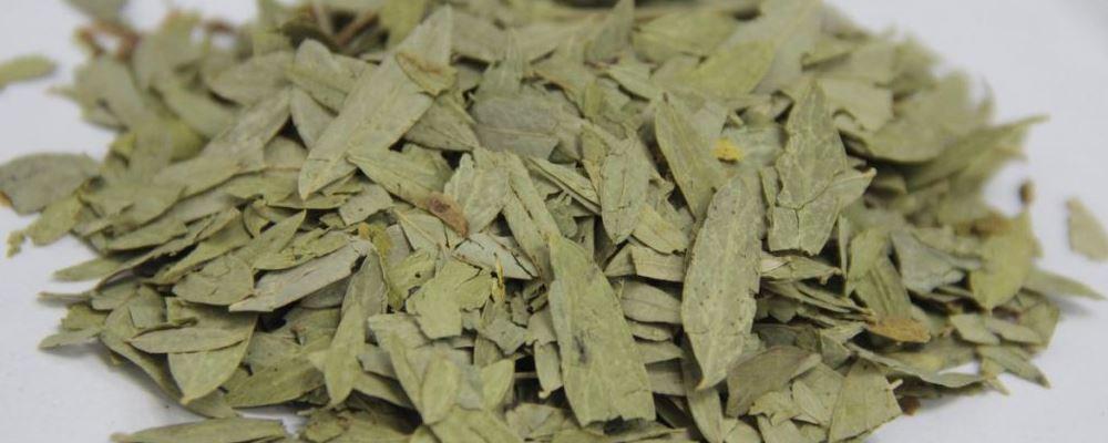 番泻叶能不能减肥 番泻叶减肥有什么副作用 番泻叶有什么功效