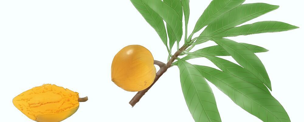 如何吃蛋黄水果专家教你如何吃蛋黄水果