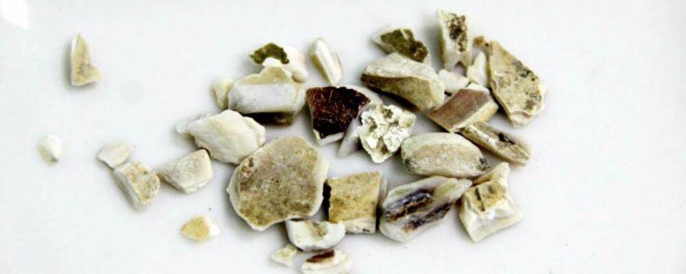 蛤壳的作用和功能