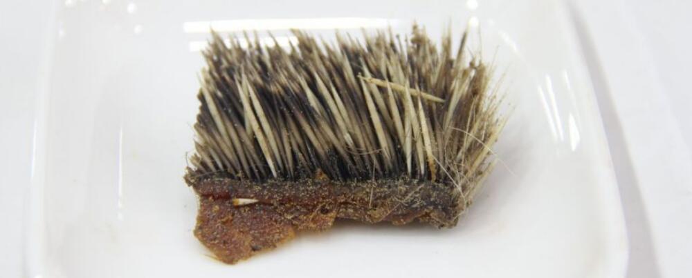 刺猬皮的作用和功能