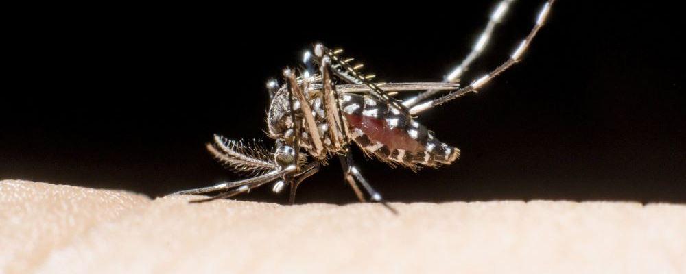 蚊子成人类顶级掠食者 怎么防止蚊虫叮咬 有哪些防蚊灭蚊措施