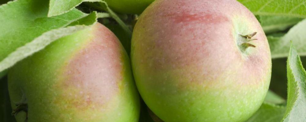 三日苹果减肥法 苹果减肥法做法 苹果减肥法有用吗