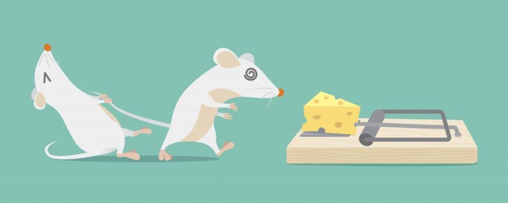 江西大余全民灭鼠 老鼠会传播哪些疾病 老鼠会传给人哪些病