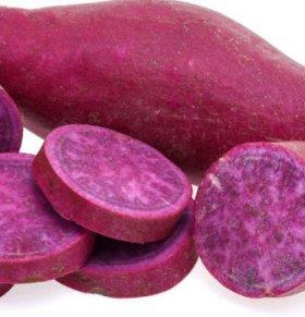 经常吃紫薯有哪些好处 紫薯有哪些作用 紫薯要怎么吃