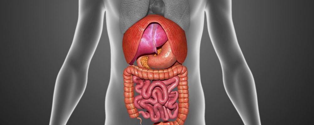 肝硬化的治疗 常见的膳食纤维 膳食纤维的作用