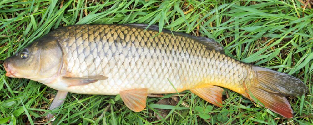 秋季养生小常识 秋季养生要注意哪些 秋季适合吃什么鱼