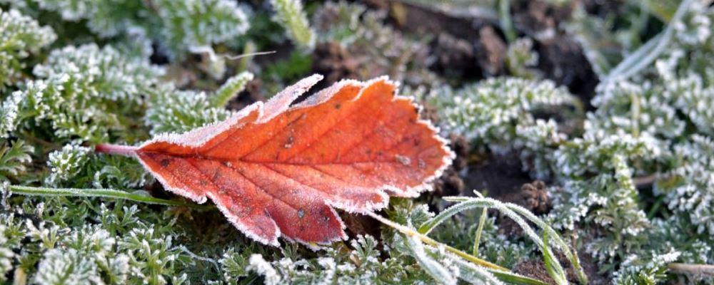 冬至养生小常识 冬至健康养生及小常识 冬至养生注意事项
