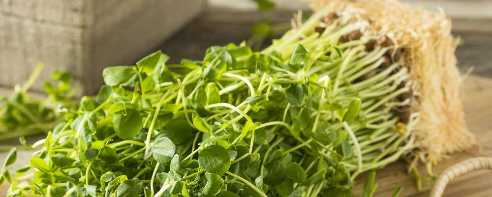 过水烫就好吃的蔬菜 哪些青菜可以烫 什么菜烫水就好吃
