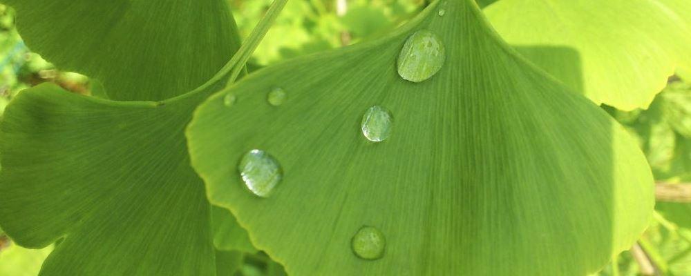 雨水节气的养生重点是什么 雨水节气如何养生 雨水节气如何春捂