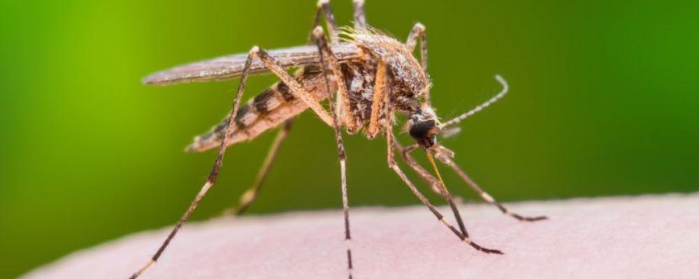 蚊虫叮咬会传播新冠病毒吗 蚊虫叮咬会传播什么疾病 蚊虫叮咬后怎么办