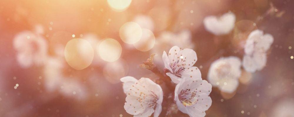 春分时节将至如何养生 春分养生技巧 春分季节的特点