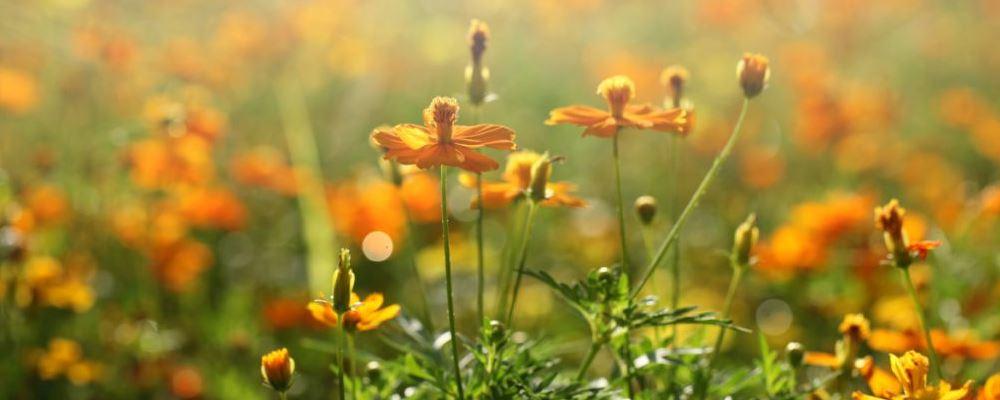 春分节气将至要注意什么 春分将至养生的禁忌 春分如何养生