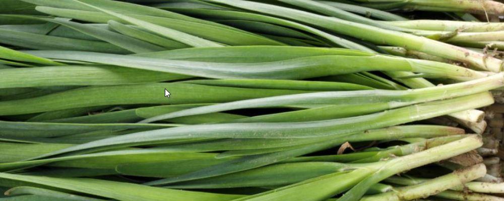 春季吃韭菜好吗 韭菜的功效与作用 春季吃韭菜有什么好处