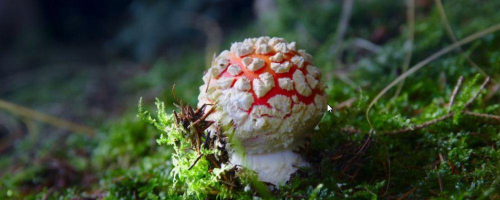 野生菌中毒该怎么办 中毒的表现是什么 吃野生菌会中毒吗