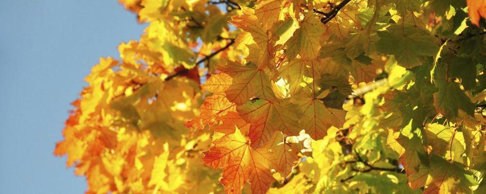 秋季如何根据节气养生 秋分节气如何养生 白露节气养生需要注意什么