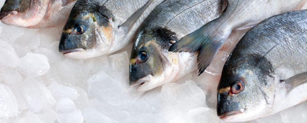早孕先兆流产不能吃什么鱼  什么鱼发生先兆流产的孕妇不能吃 孕妇不能吃什么菜