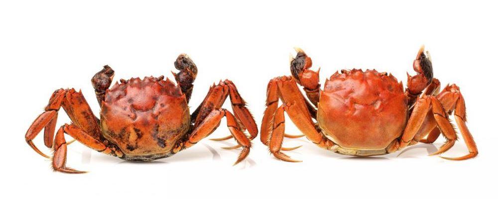 哺乳期女人要少吃螃蟹 注意饮食才能避免回奶