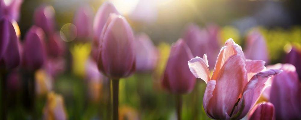 远离鲜花为何还会花粉过敏 预防过敏的方法有哪些 怎样可以预防花粉过敏