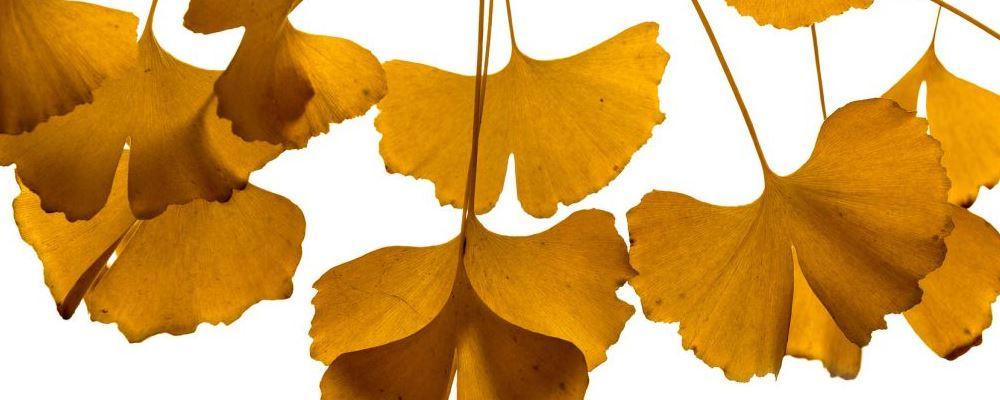 身体 技巧 推荐 保健 有助 如何 正确 养生 人们 之后 秋季