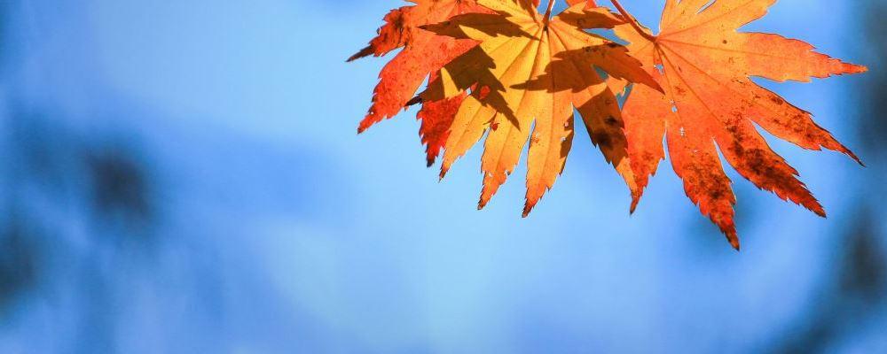 出伏后还要热多久 秋季进补养生要注意什么 秋季养生有哪些是需要注意的