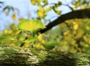 癫痫在季节变换中要注意什么