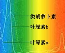 光敏色素调控疗法