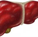 脂肪肝多久会变成肝硬化 脂肪肝会变成肝硬化吗 怎么预防脂肪肝