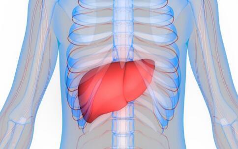 早期肝硬化什么症状,肝硬化可以治好吗,肝硬化的症状