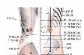 志室穴的功效与作用,按摩志室穴的作用,志室穴的准确位置