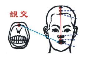 龈交穴的功效与作用,龈交穴的准确位置图,龈交穴穴位配伍