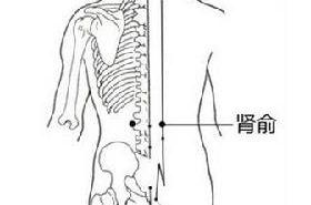 肾俞穴的功效与作用,肾俞穴的准确位置,按摩肾俞穴的作用
