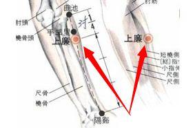 上廉穴的功效与作用,上廉穴的准确位置图,按摩上廉穴的作用