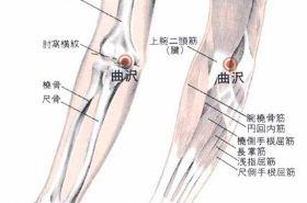 曲泽穴的功效与作用,曲泽穴的准确位置图,按摩曲泽穴的作用