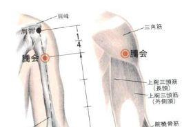 臑会穴的功效与作用,臑会穴的准确位置图,按摩臑会穴的作用