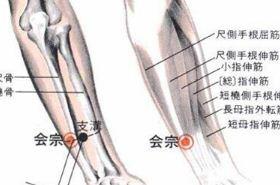 会宗穴的功效与作用,按摩会宗穴的作用,会宗穴的准确位置图