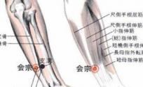 会宗穴的功效与作用 按摩会宗穴的作用 会宗穴的准确位置图