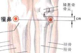 犊鼻穴的功效与作用,犊鼻穴的准确位置图,按摩犊鼻穴的作用