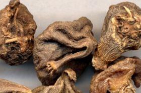 山慈菇的功效与作用,山慈菇是什么,山慈菇的功效