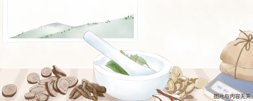 麻鱼胆 麻鱼胆的功效 麻鱼胆的作用