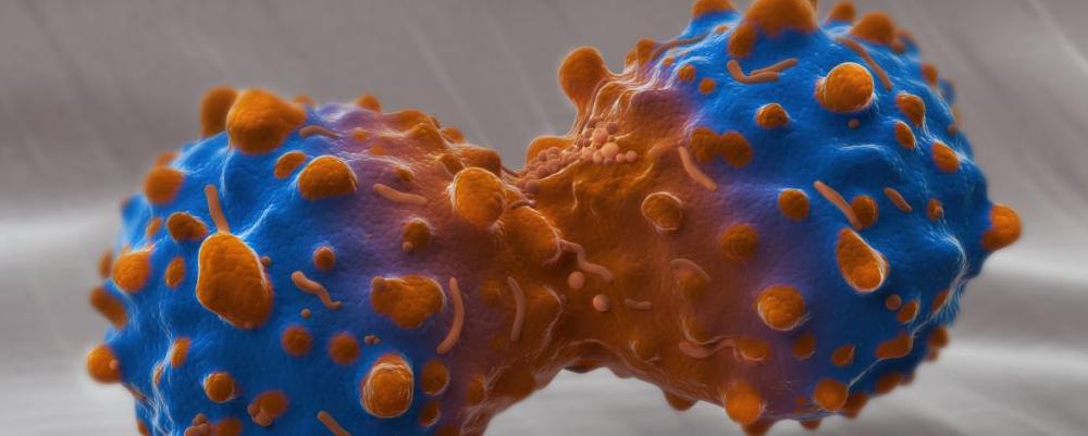 具有抗癌效果的中草药有哪些 哪些中草药能抗癌 如何煎煮中草药