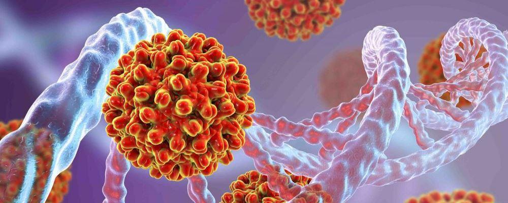 四类生殖器疱疹